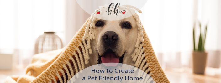 Create a Pet Friendly Home